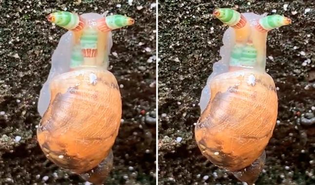 Los caracoles pueden sobrevivir al virus zombi