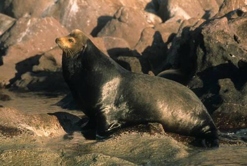 Las Islas y Áreas Protegidas del Golfo de California (México) inscritas en la Lista del Patrimonio Mundial en Peligro