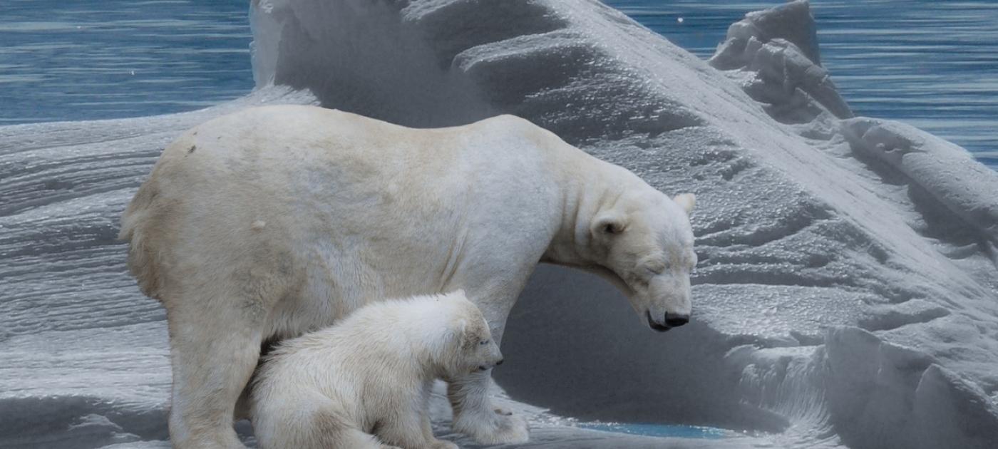 Reducciones históricas en la extensión del hielo marino del Ártico