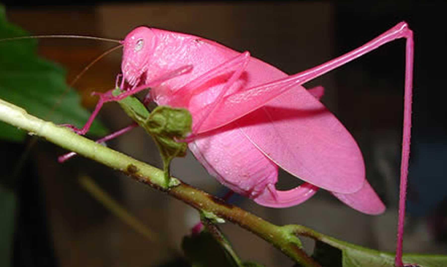 Las 10 especies más espectaculares descubiertas esta década