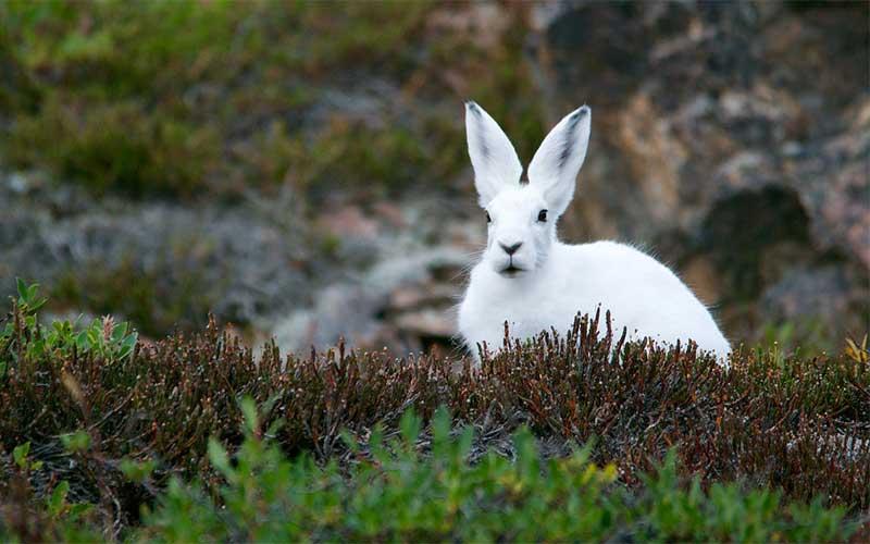 Trivia naturaleza. Pon a prueba tus conocimientos. ¿Cuánto sabes sobre animales?