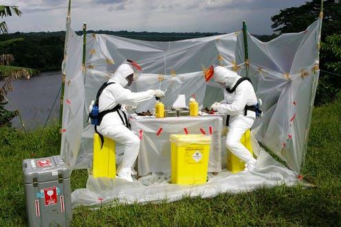 Así influyen los cambios medioambientales en la aparición de nuevas enfermedades