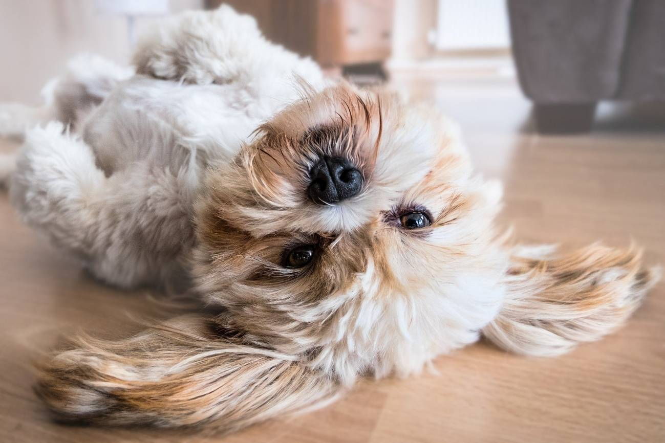 Cómo seguir cuidando de tu mascota ante la crisis del COVID-19
