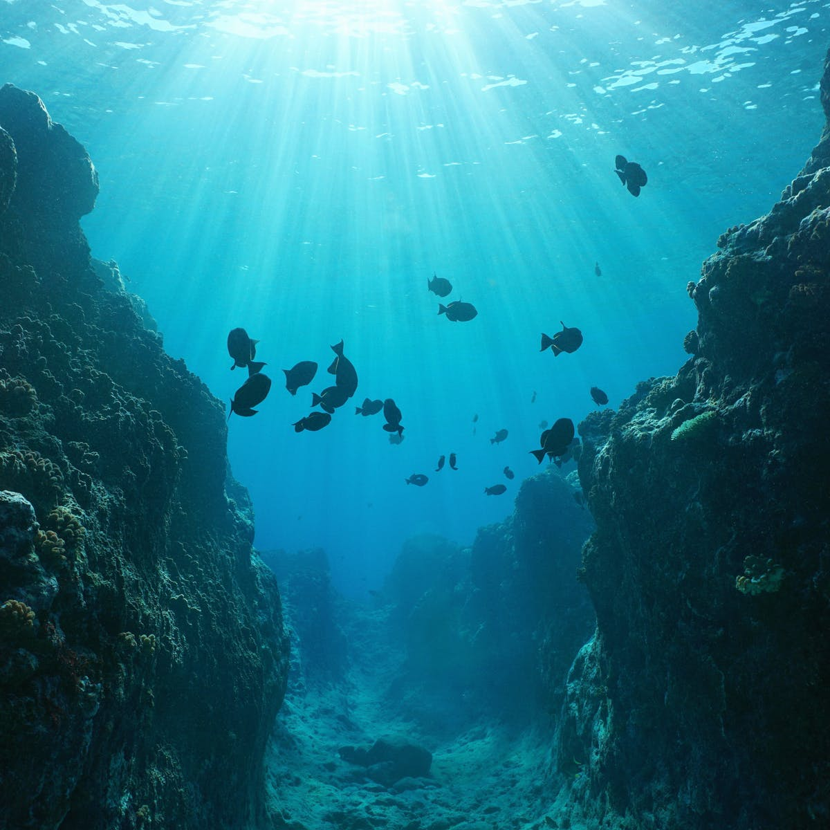 ¿Qué hay más allá de la orilla del mar? La parte más desconocida del planeta