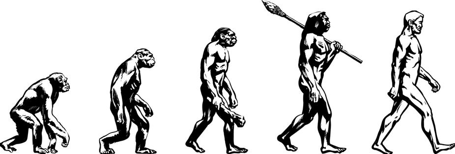 Si la evolución no avanza en línea recta, ¿por qué dibujarla de esa manera?