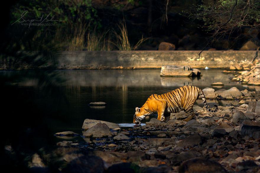40 hermosos y escurridizos animales que me encontré en la India