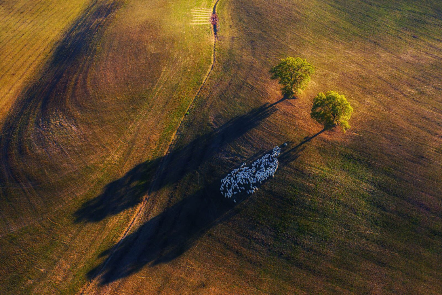 Las mejores capturas del «fotógrafo del año Nature TTL»