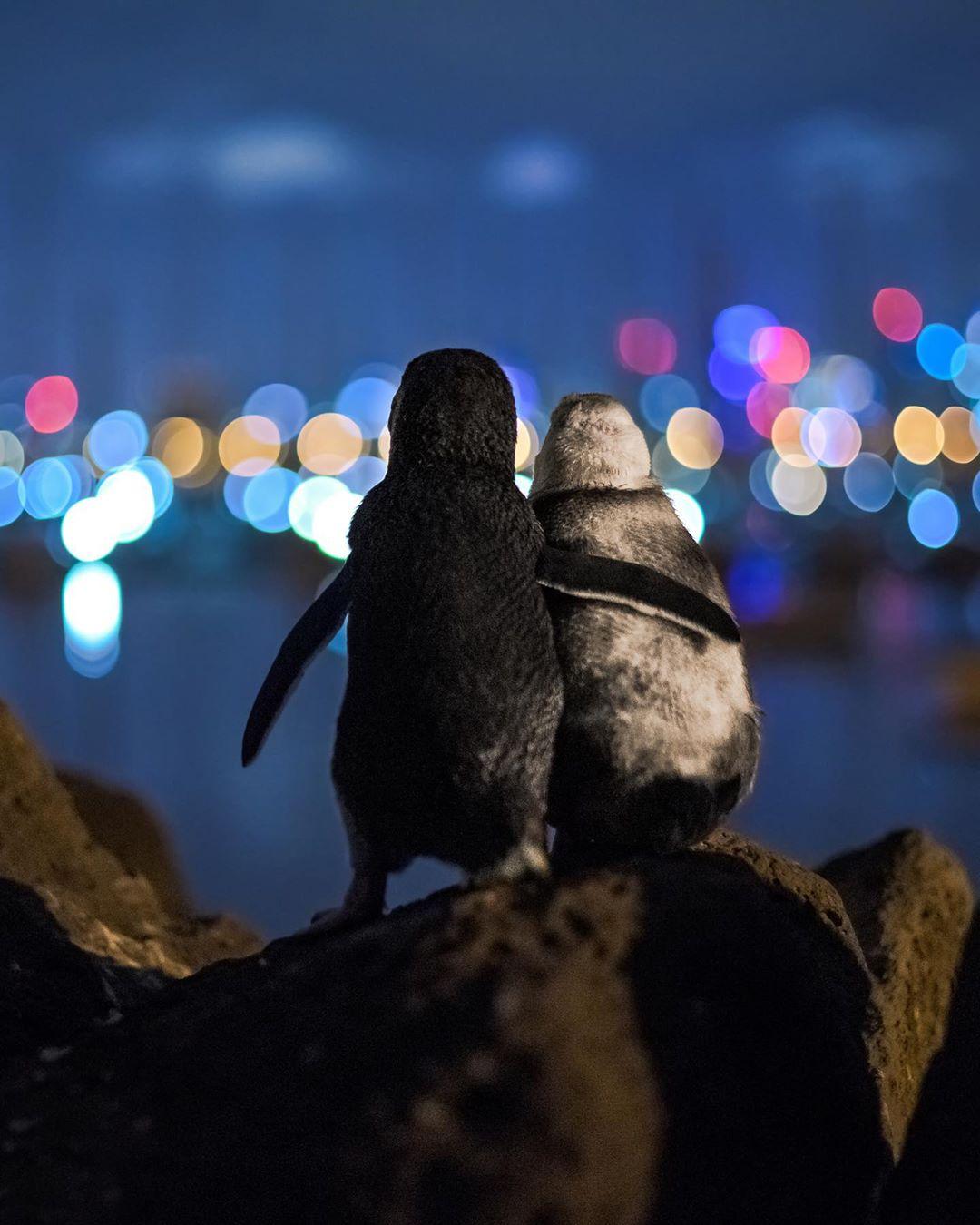 El reconfortante abrazo de dos pingüinos mirando al horizonte