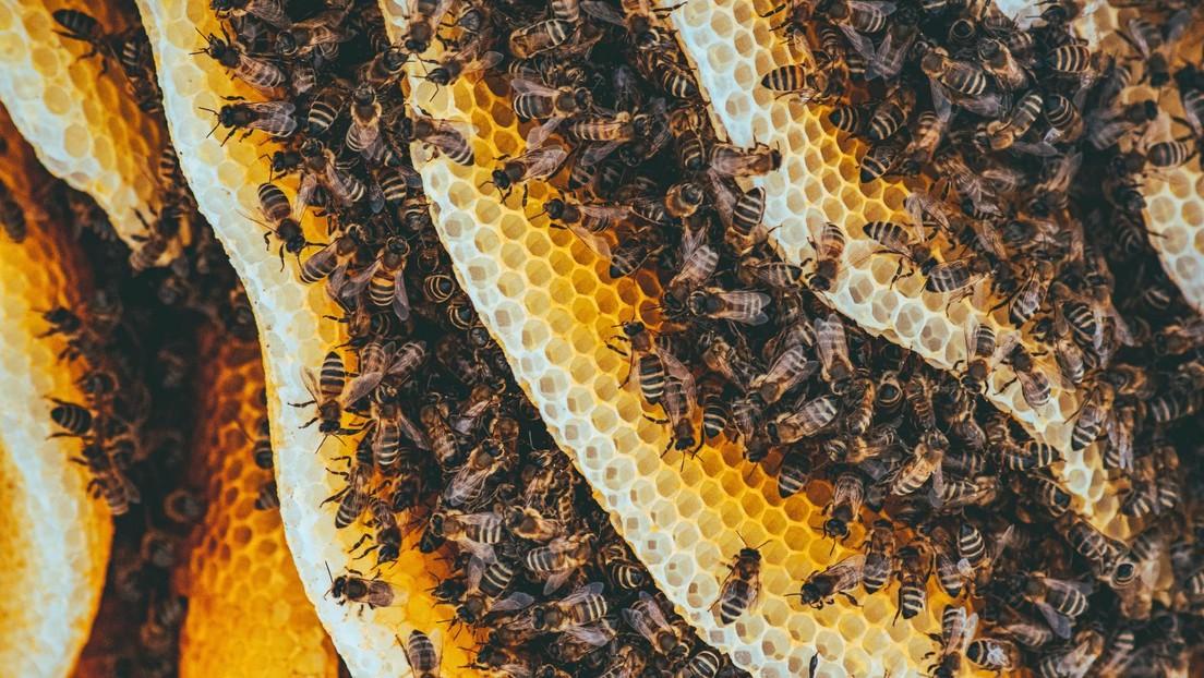 El hipnótico mecanismo de defensa de las abejas para ahuyentar a sus enemigos