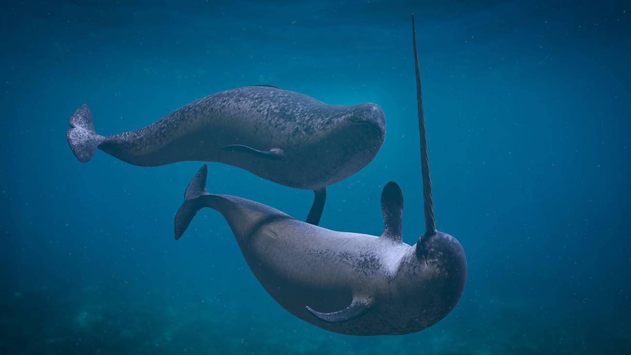 Capturan los extraños sonidos de los unicornios del mar