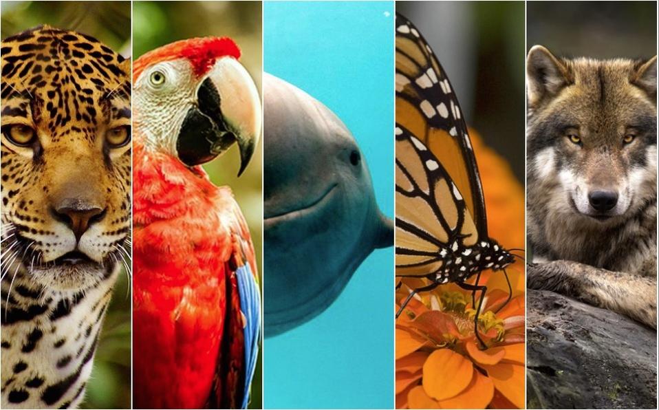 La sexta extinción masiva acelera: más de 500 especies de vertebrados terrestres están a punto de desaparecer