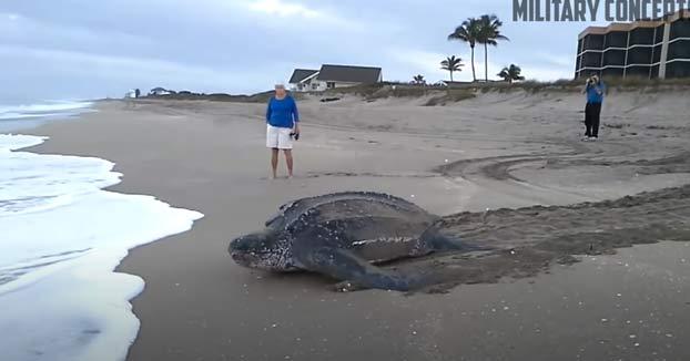 Así vuelve al mar la tortuga más grande del mundo