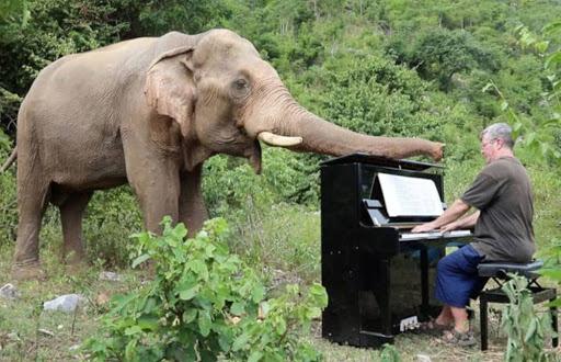 Beethoven para elefantes que han tenido una vida dura