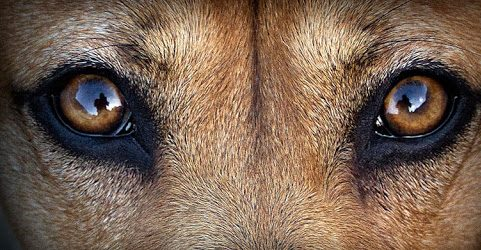 Cómo ven los perros: más allá del blanco y negro