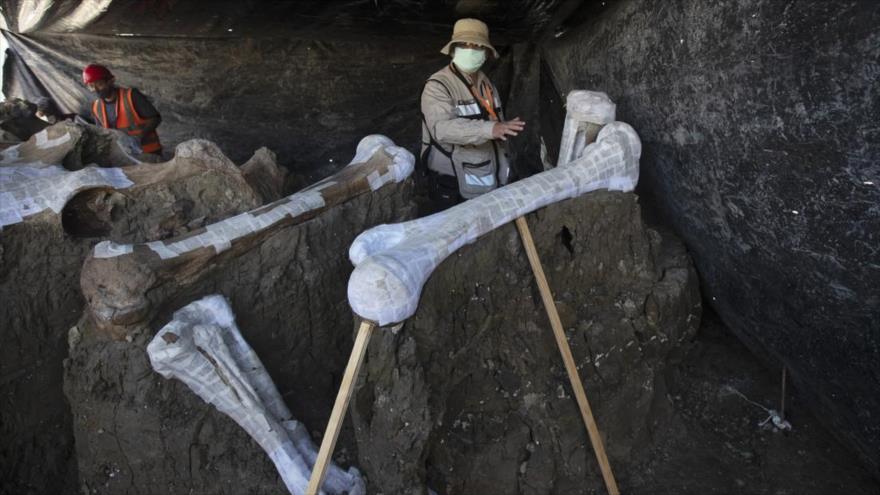 Descubren en México el mayor cementerio de mamuts del mundo
