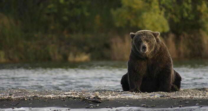Se encuentran con un oso y hacen todo lo que no hay que hacer