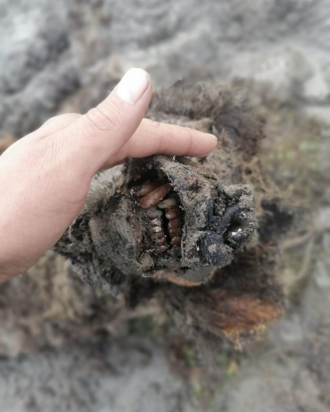 Hallan los restos intactos del oso de las cavernas