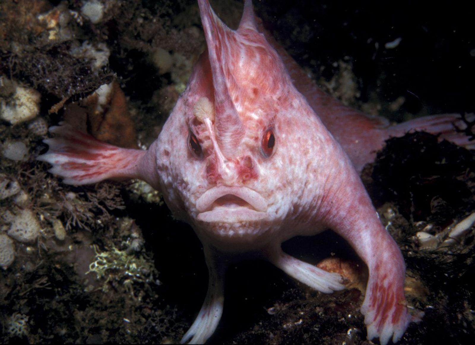 Descubren más de 10 especies de peces capaces de caminar fuera del agua