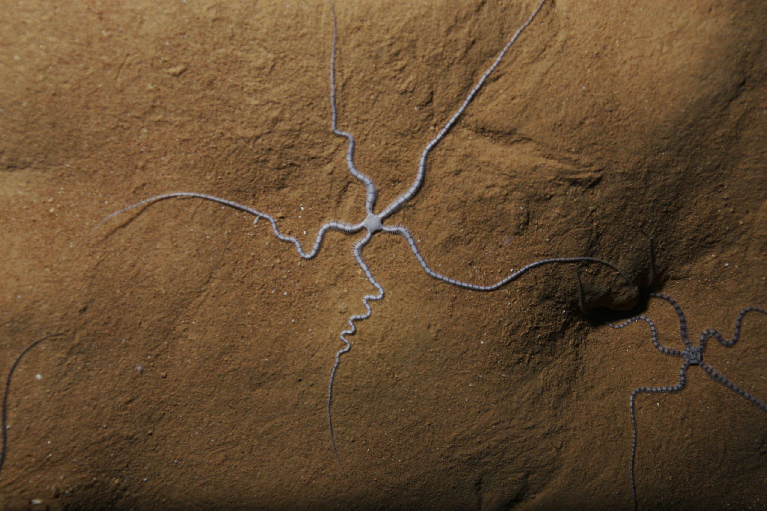 Documentan una extraña especie marina que habita en cuevas