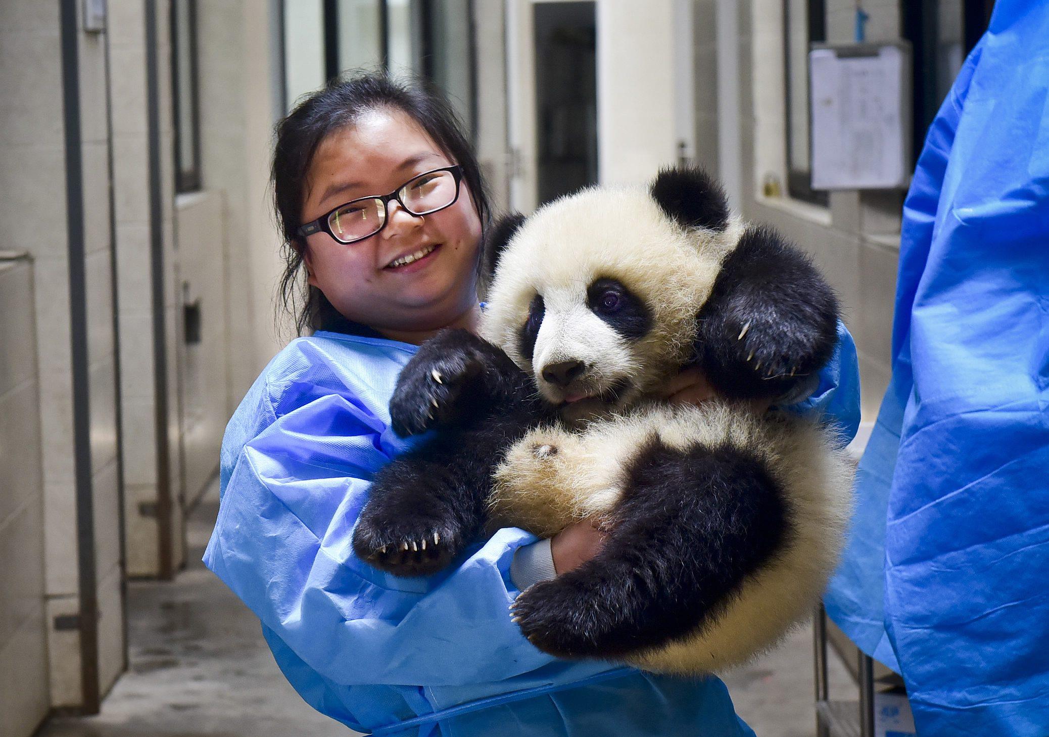 Mei Yan, la cuidadora de pandas con más paciencia del mundo