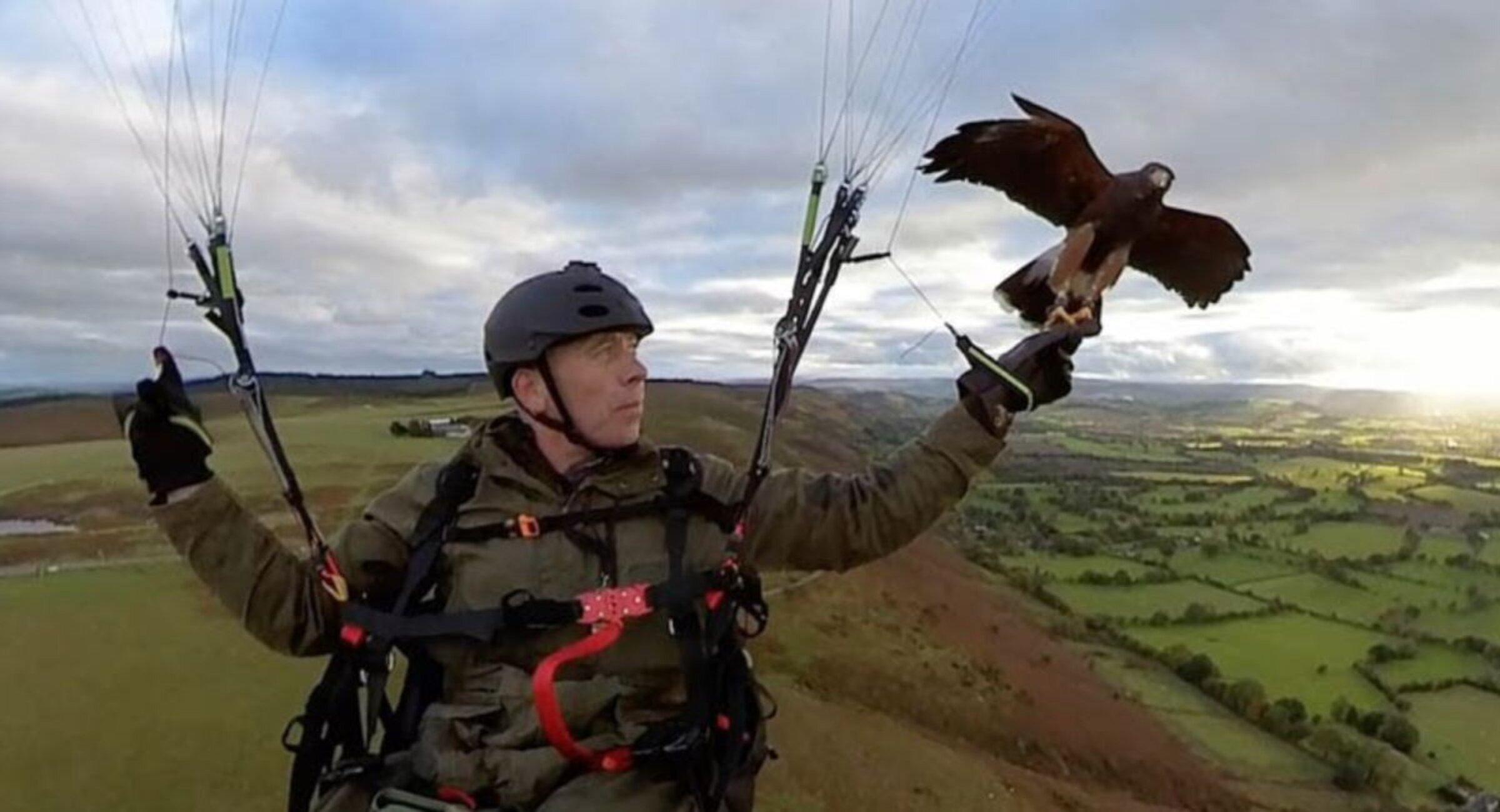 El hombre que vuela en parapente al lado de su halcón