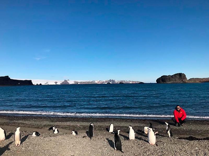 peligroso virus en pingüinos